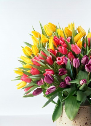 tulip_bouquet_hd_picture_166825