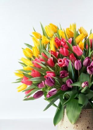 tulip_bouquet_hd_picture_166825